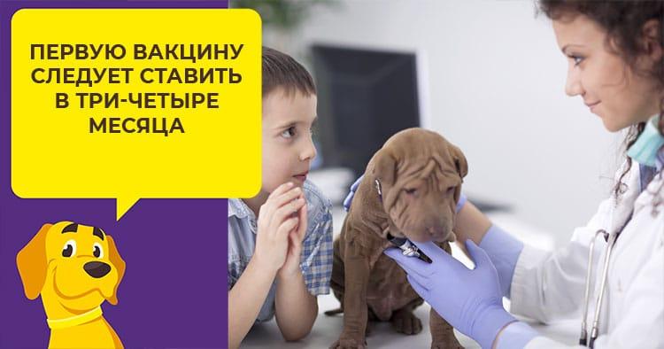 когда ставят прививку от бешенства щенкам