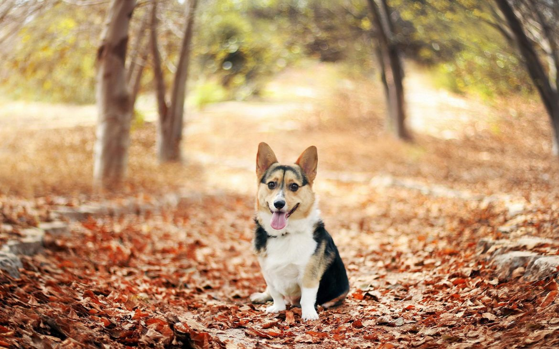 какие витамины подходят для собак крупных пород