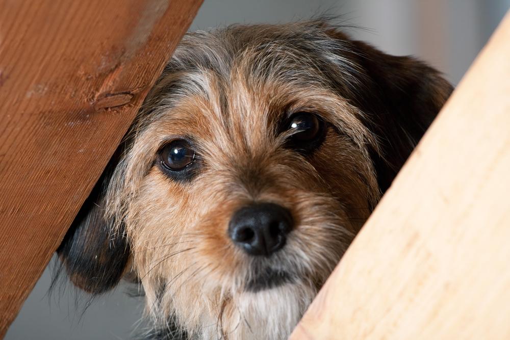 Снотворное для собак  виды и правила применения