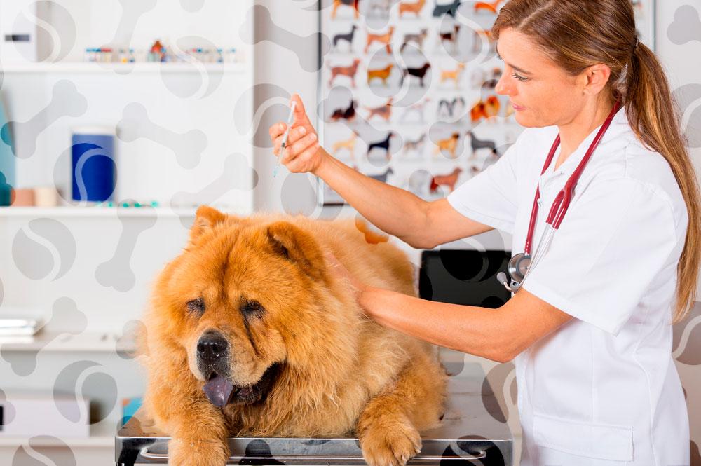 Инструкция по применению гамавита для собак