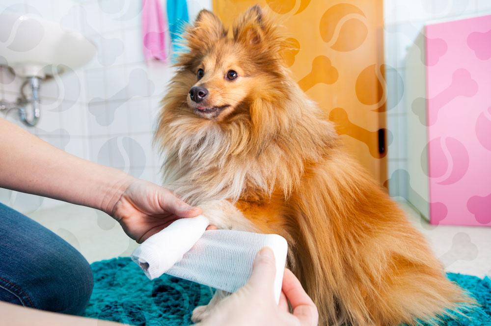 Кетофен для собак  эффективное обезболивающее
