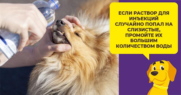 Как давать собаке противовоспалительный препарат Римадил в таблетках и инъекциях