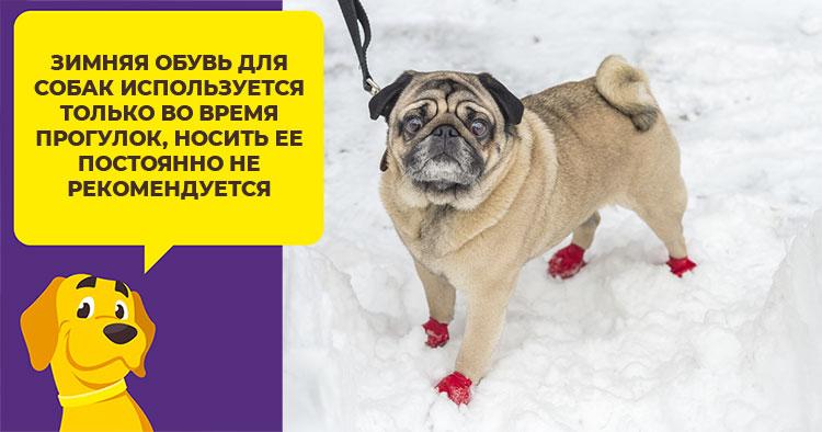 5675fe0a6cd3 Дополнительного ухода за лапами обутой собаки не требуется, достаточно  осмотра на наличие потертостей или мозолей.