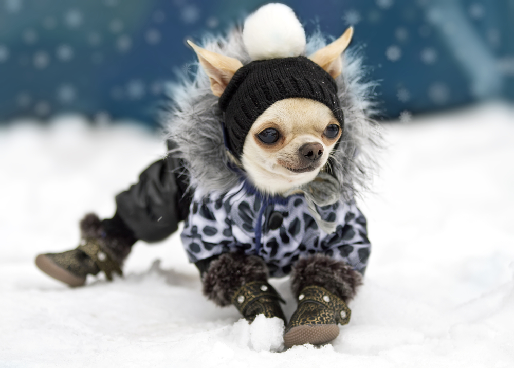 d10e58feb89e Зимняя обувь для собак  как выбрать или сшить своими руками
