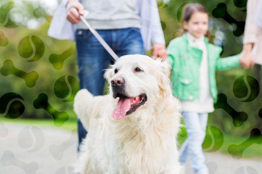 Инструкция по применению препарата Катозал для собак