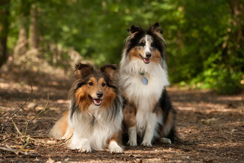 Адвокат для собак  на холку от клещей ветеринарный препарат