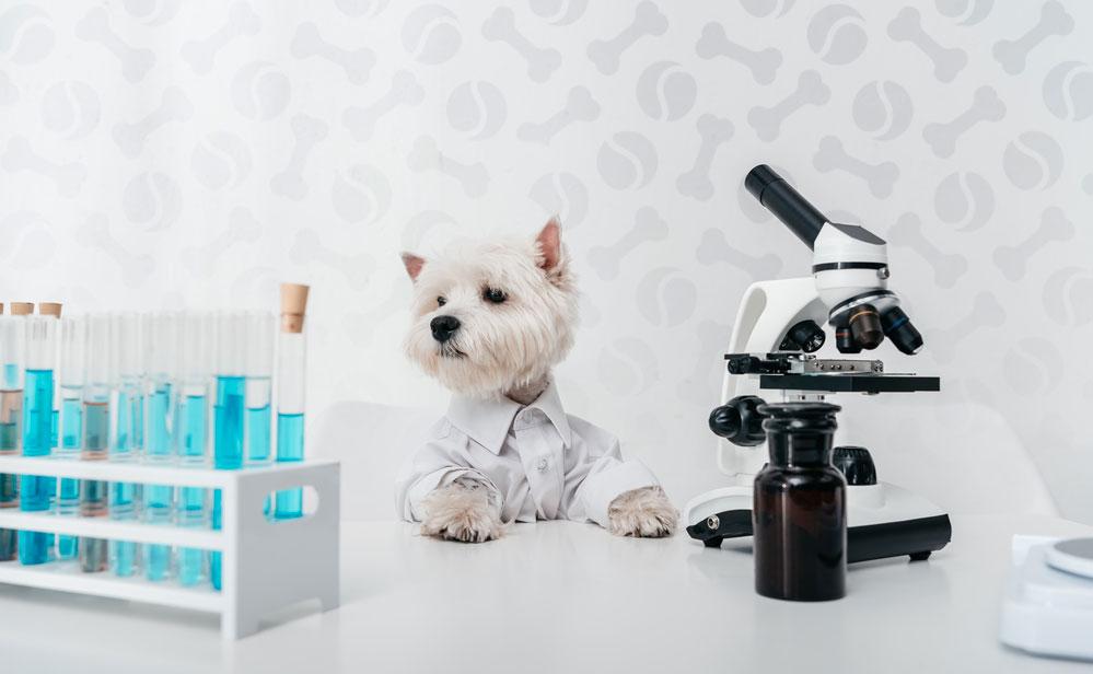 Как колоть Флексопрофен для кошек