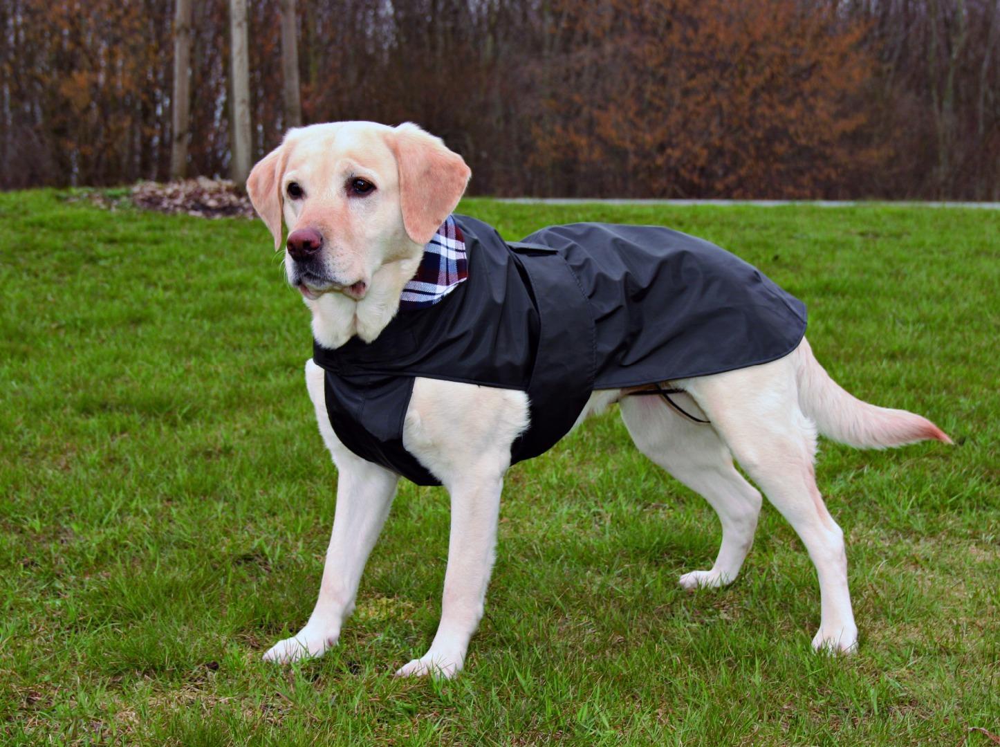 Как одеть попону собаке