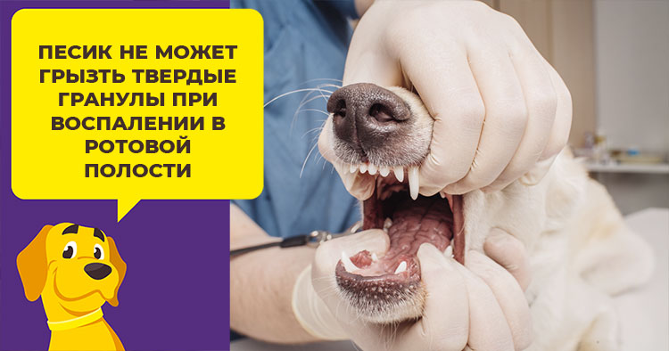 Почему собака отказывается от сухого корма: физиологические и психологические причины