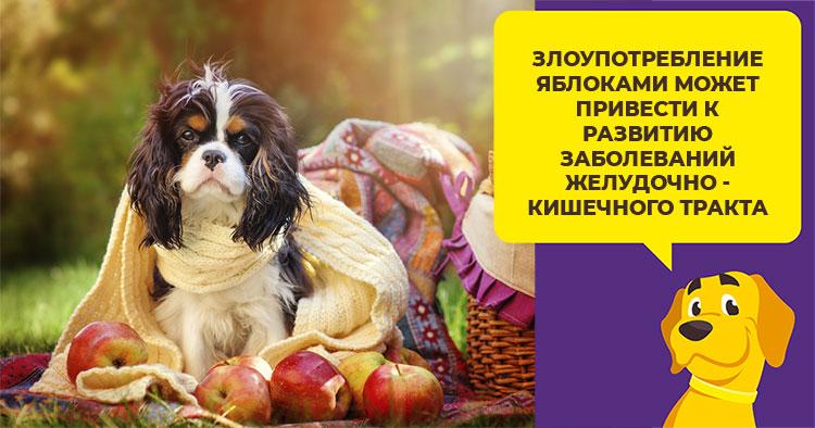 Можно ли давать яблоки собаке или маленькому щенку