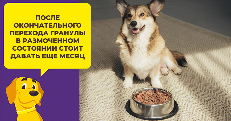 Как перевести собаку с сухого корма на натуральный