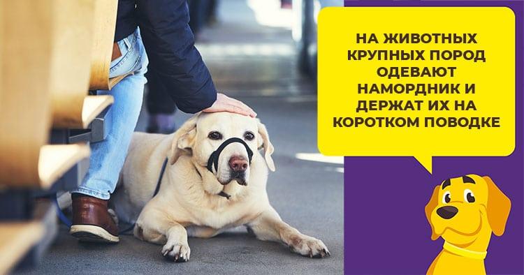 Перевозка собак в автобусе