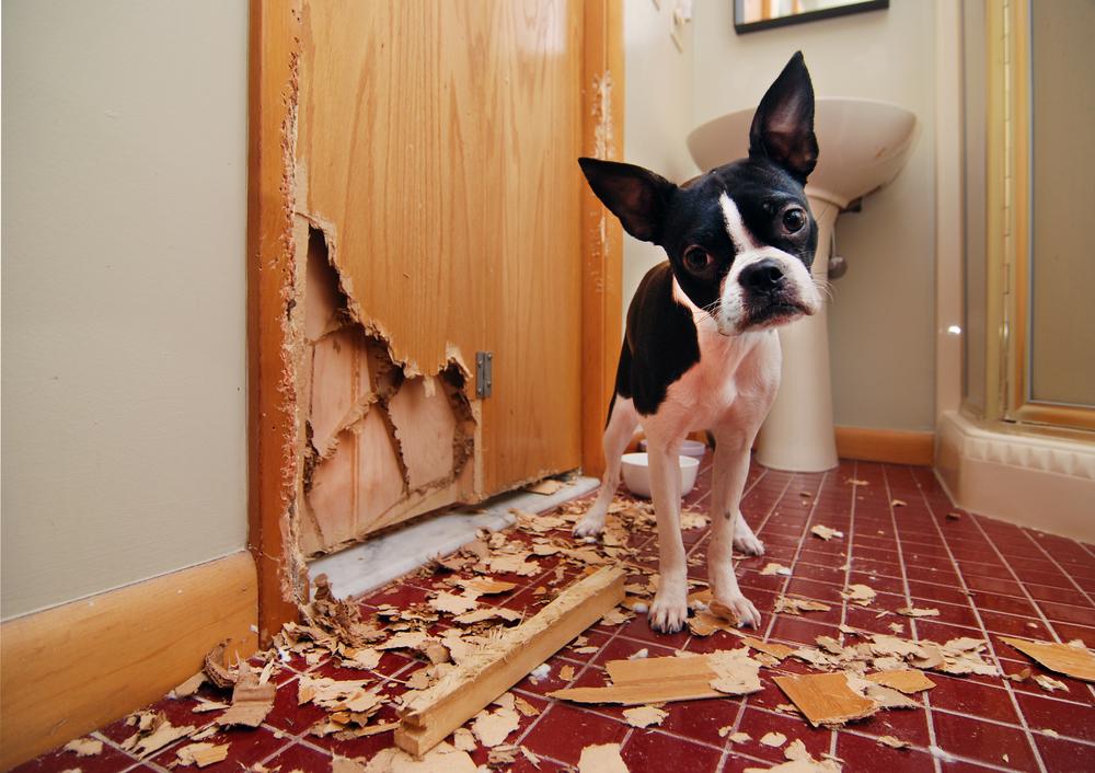 Как отучить собаку грызть вещи когда она остается дома одна