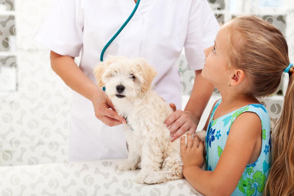 Как лечить дирофиляриоз у собак