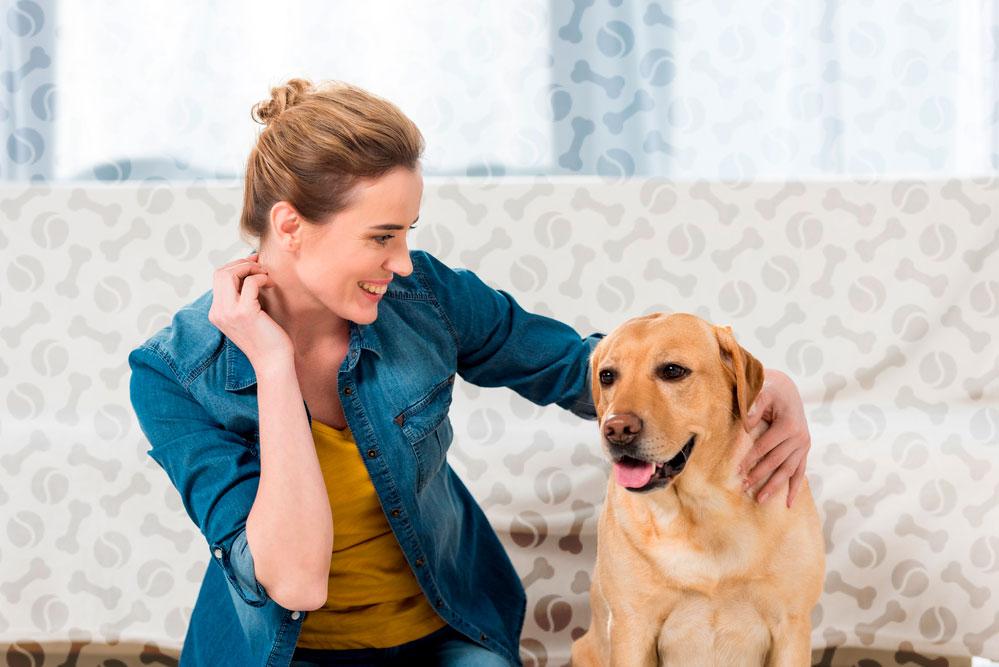 Как выбрать щенка лабрадора и как за ним ухаживать