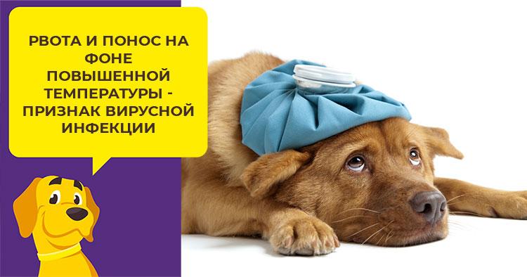 Как остановить понос и рвоту у собаки