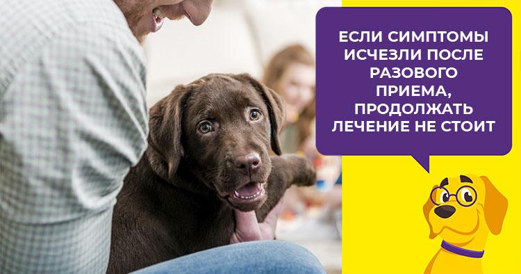 Сколько давать собаке супрастина от аллергии — Аллергия и все о ней