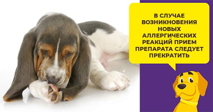 Можно ли давать собаке супрастин и как рассчитать дозировку препарата
