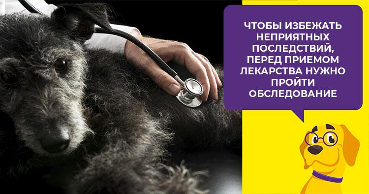 Свойства и особенности приема препарата Эмицидин для лечения собак