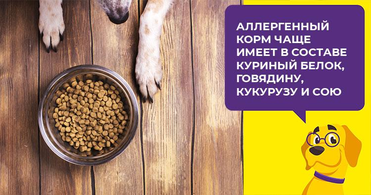 Как проявляется и чем лечится аллергия у собак и щенков