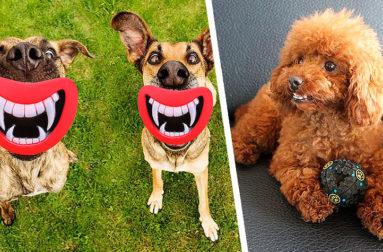 Как пользоваться каплями, сиропом или суспензией Гельминтал для лечения собак