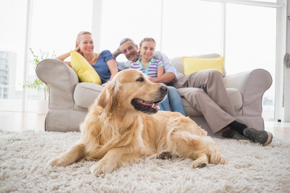 Фитокальцевит - сбалансированный комплекс витаминов для собак и щенков