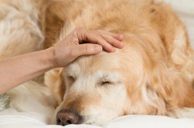 Экзекан - уникальный препарат от аллергии для собак