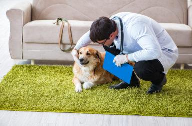 Пироплазмоз у собак – причины, симптомы, лечение