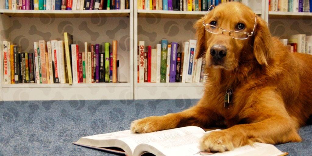 Кем мог бы работать ваш пес: 6 реальных профессий