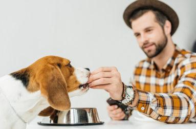 Как ухаживать за собакой породы чихуахуа: создаем лучшие условия для малышки