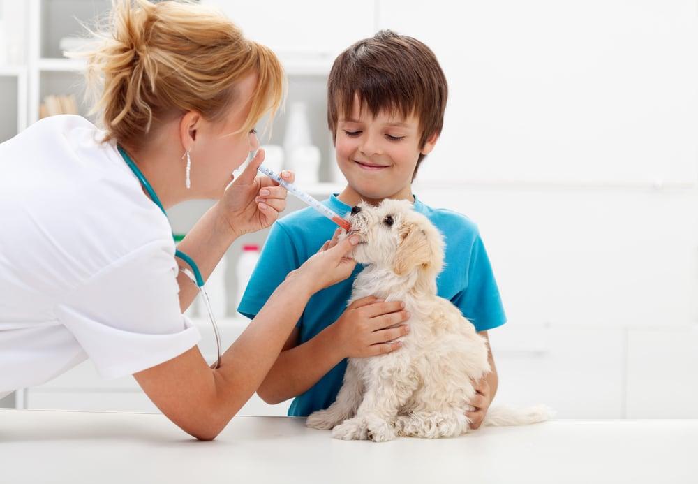 Лекарство Серения спасет собаку от укачивания и рвоты