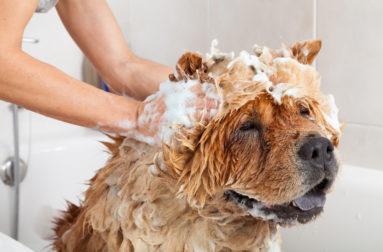 Как давать собаке таблетки или капли Стоп-стресс