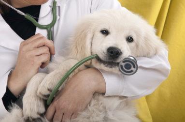 Можно ли полностью вылечить эпилепсию у собаки и остановить приступы
