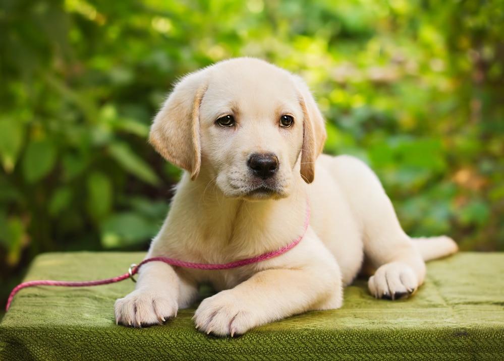 Как применять вазотоп для собак: особенности, дозировка, противопоказания