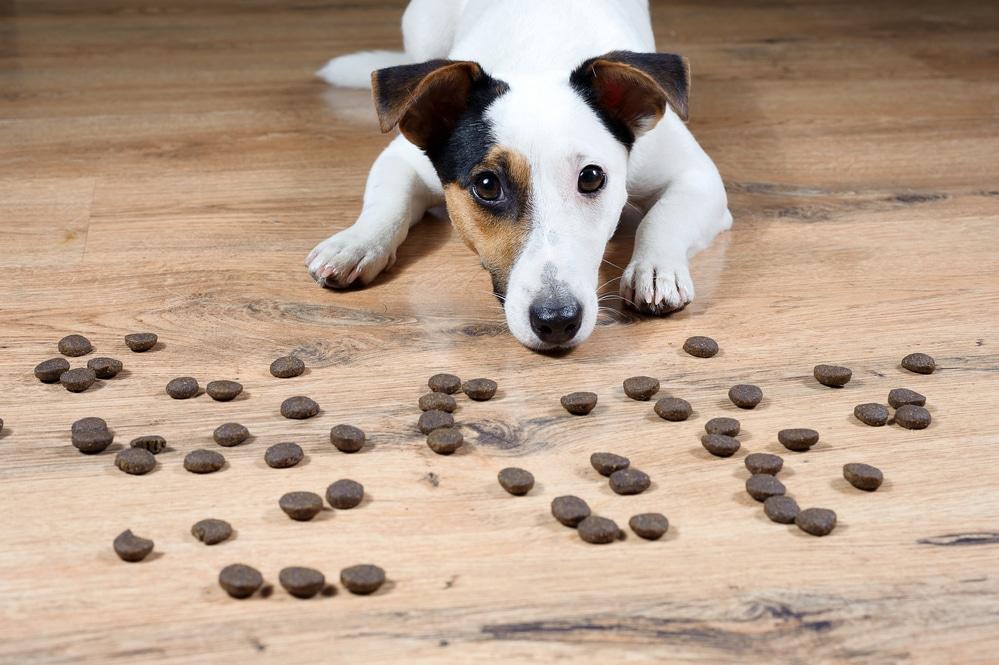 Обед по расписанию: выбираем автоматическую кормушку для собаки
