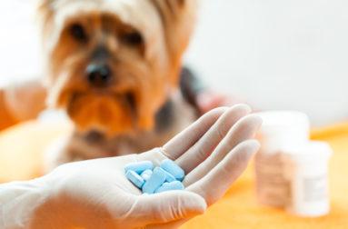 Как выбирают корм для стерилизованной или кастрированной собаки