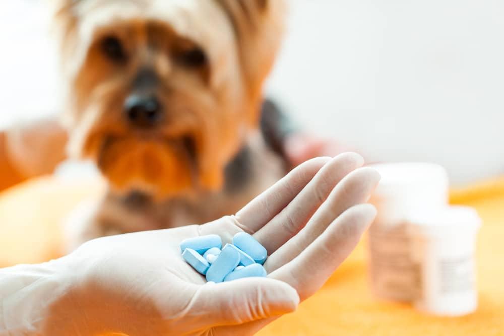 Празицид для собак и щенков: состав, инструкция, отзывы