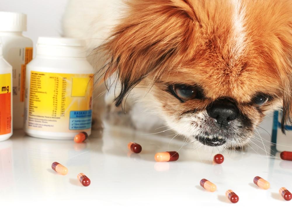 Рыбий жир для собак: можно ли давать и сколько давать