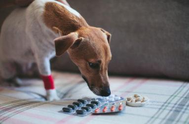 Все о выборе и содержании щенков кокер спаниеля