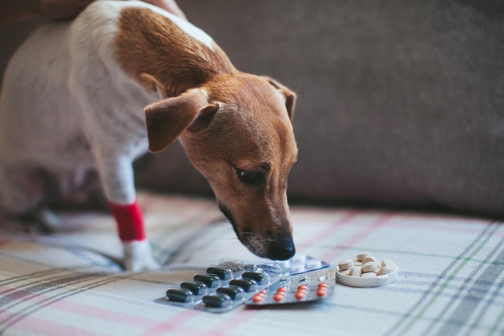 Инструкция по применению препарата Трококсил для снятия воспаления у собаки