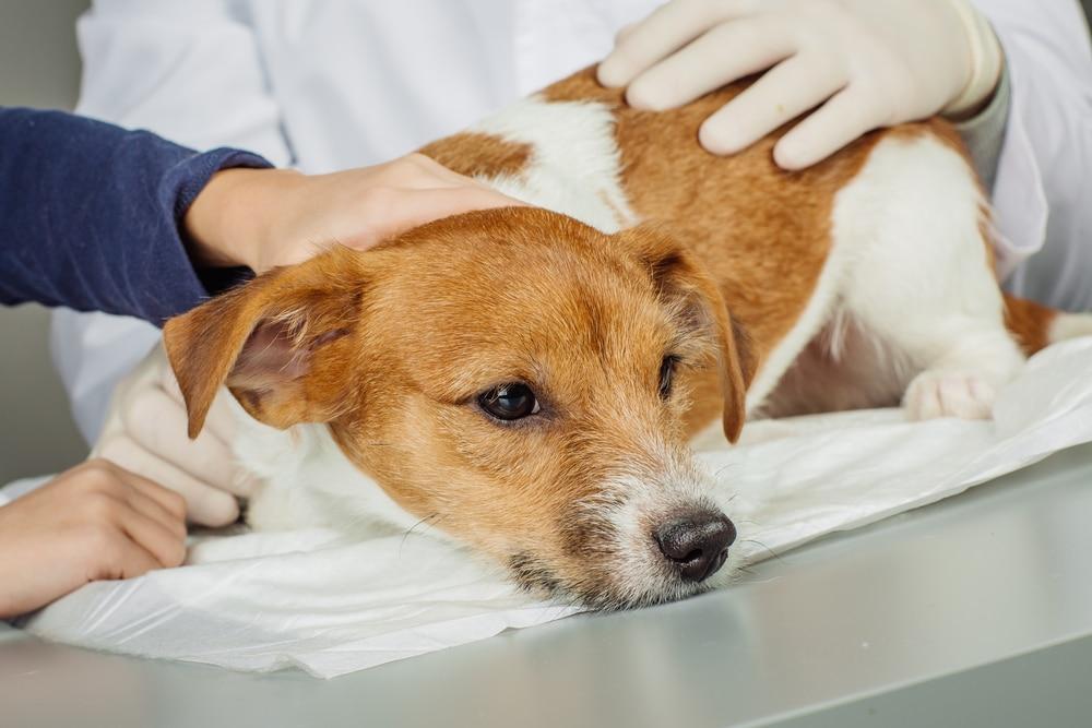 Кал со слизью у собаки - норма или симптом заболевания