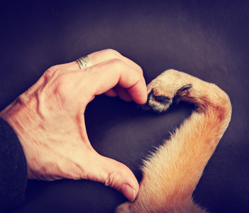 Препарат Зоокард для здорового сердца вашей собаки