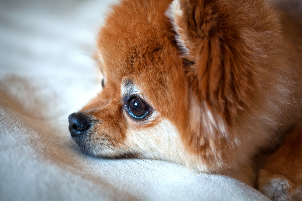 Лечение и профилактика дирофиляриоза у собак: важные правила
