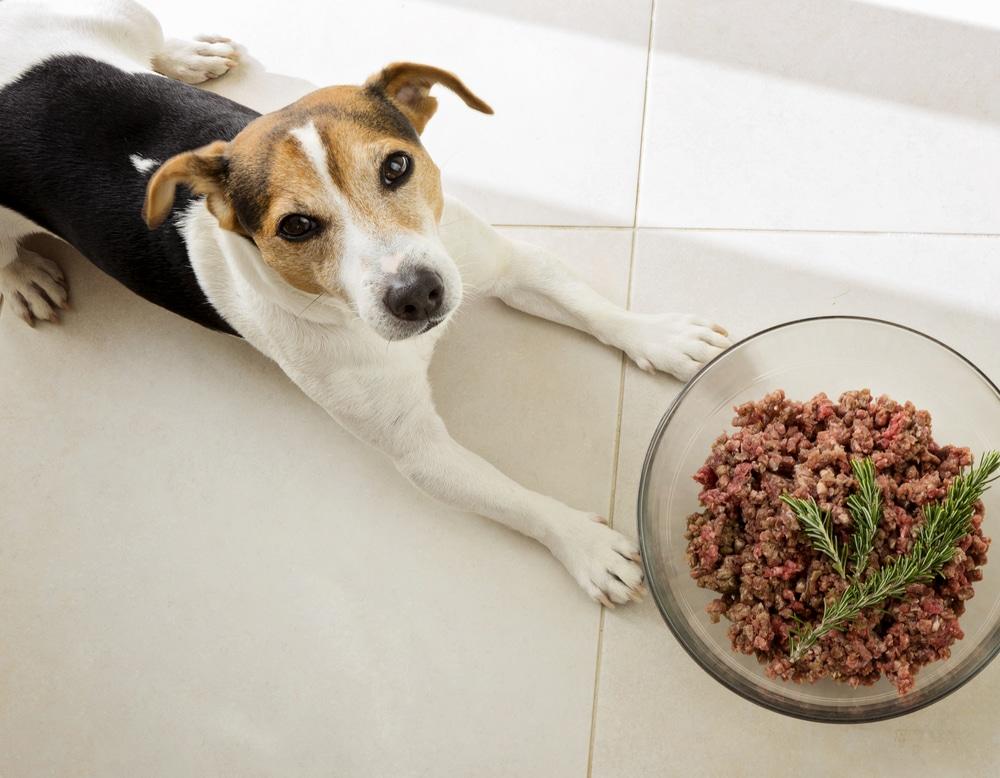 Баранина в рационе собак: включаем в рацион мякоть, субпродукты, кости