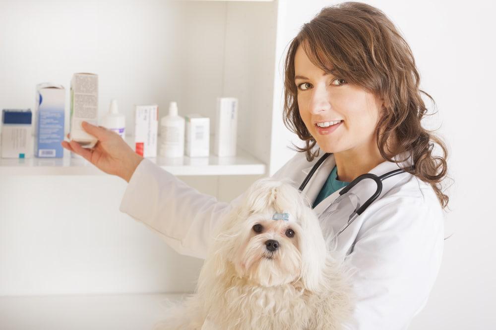 Когда собаке назначают Дексаметазон: показания и правила приема