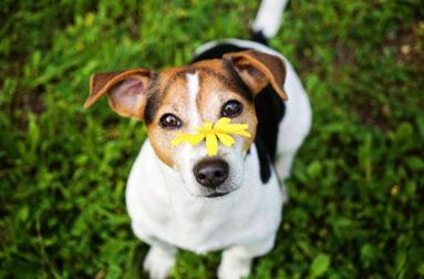 Фортифлора - препарат с пробиотиками для здоровья кишечника собаки