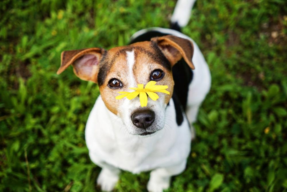 Как понять, что у собаки пищевая аллергия и чем ее лечить