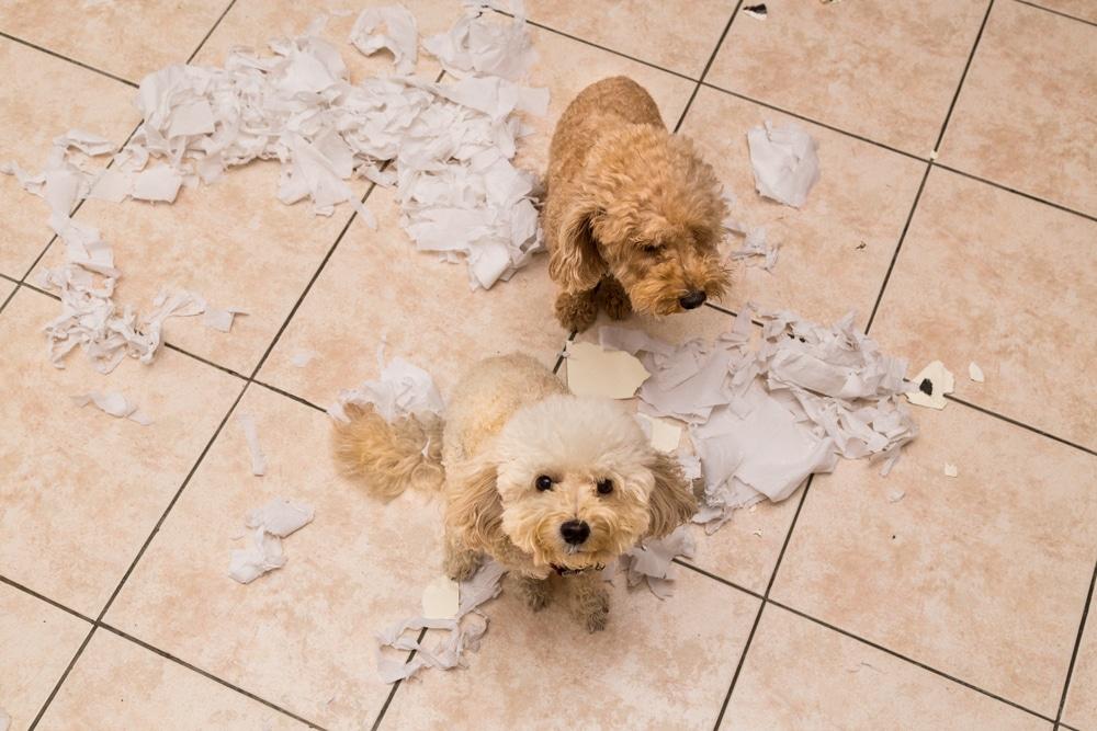 Как отучить собаку грызть вещи? 10 правил
