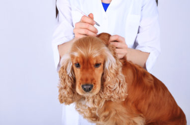 Слабительное для собак: быстродействующие, мягкие и безопасные средства