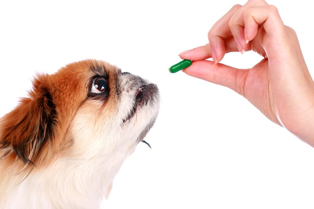 Какие пробиотики давать собаке: топ 5 популярных препаратов